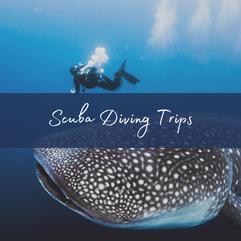 Maldives Budget Diving Trips.png