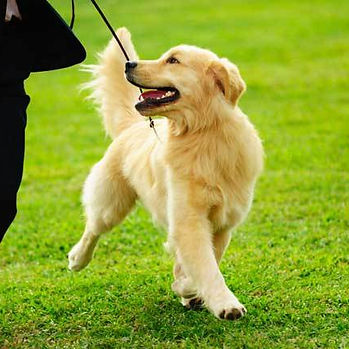 Dogtrainer in USA