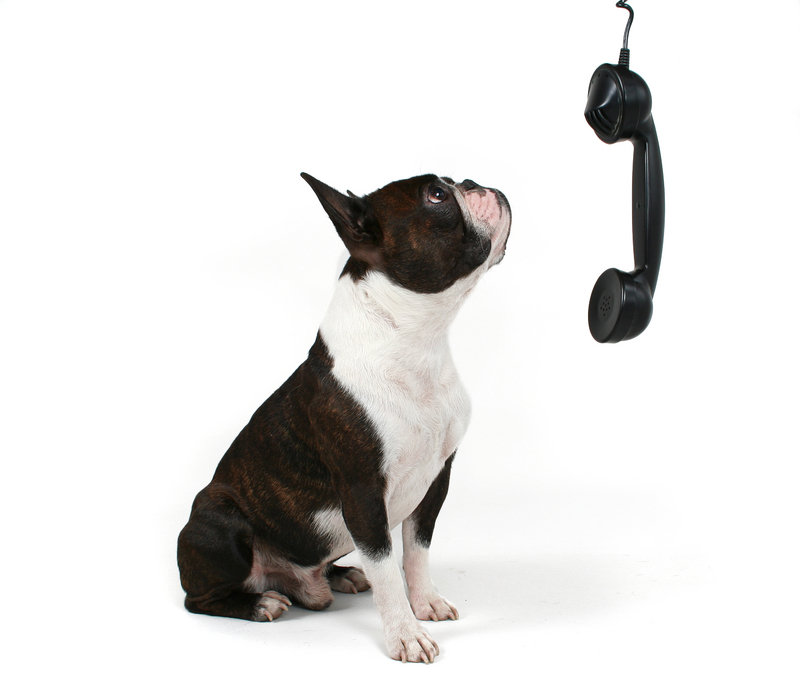 dog-on-phone.jpg