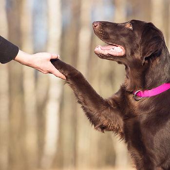 Dogmaster USA1