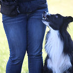 dog behavior specialist