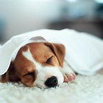 overnight-pet-sitting.jpg