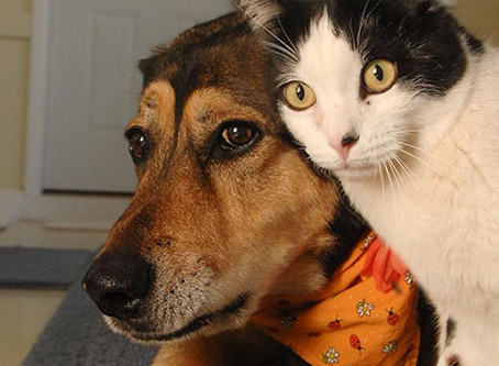 How to introduce a dog to a cat?
