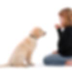 Dogmaster puppy trainer