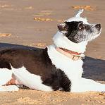 dog training boarding