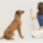 dog training Los