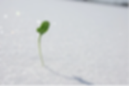 Snowsprout.png