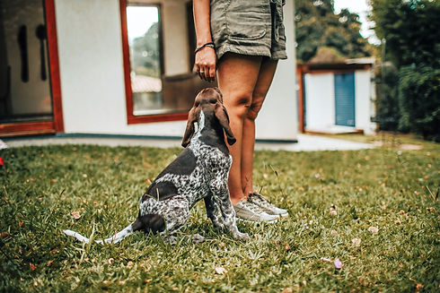 photo-of-dog-and-person-on-grass-3705255