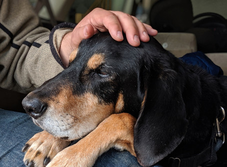 Lessons in Pet Grief: Finding Humanity & Hope in the Dark