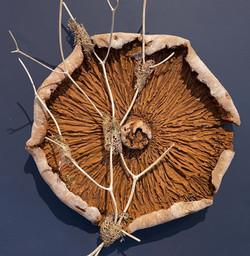 Large Mushroom Cap