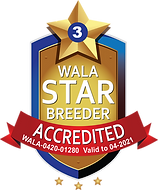 Accredited Star_Arrowhead.png