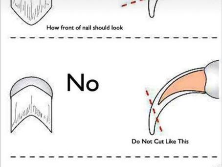 Nail trimming 101
