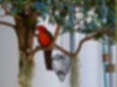 Enjoy quiet forest surrounds with abundant bird life and other native animals,