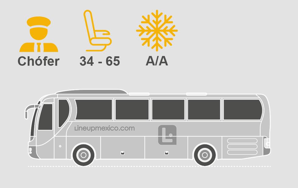 web bus.png