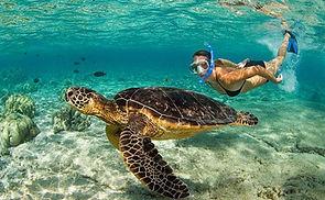 snorkel tortugas.jpg