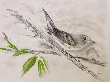 Warbler in charcoal