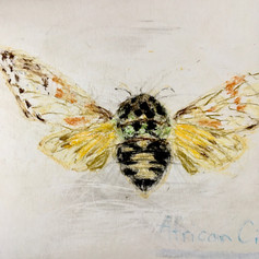 Moth with Yellow WIngs