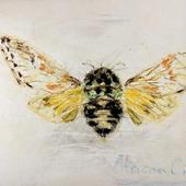 African Cicada