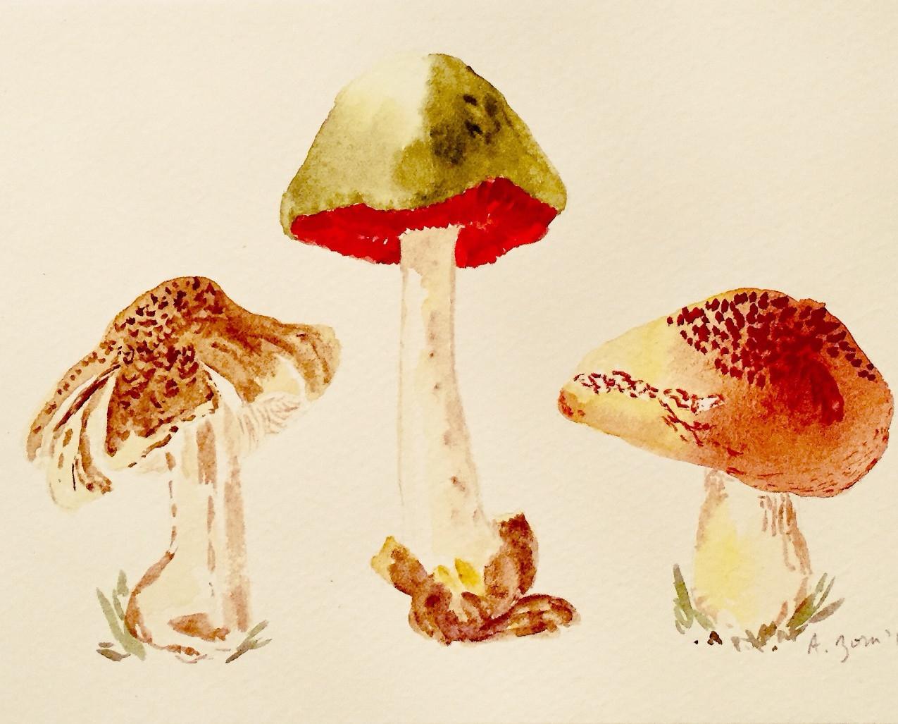 Mushrooms Tricoloma_edited