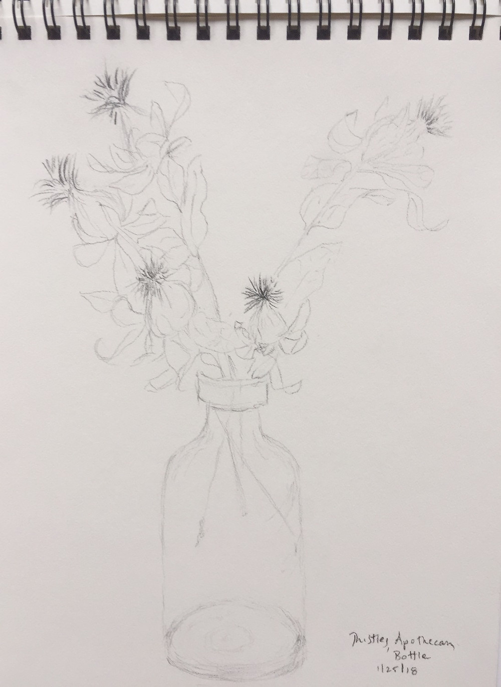 Sketch of thistles