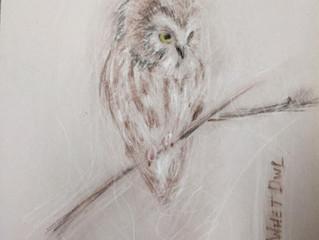 An 'Irruption' of owls