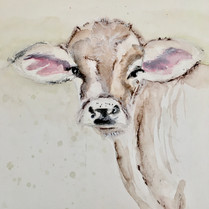Cow with Pink Ears