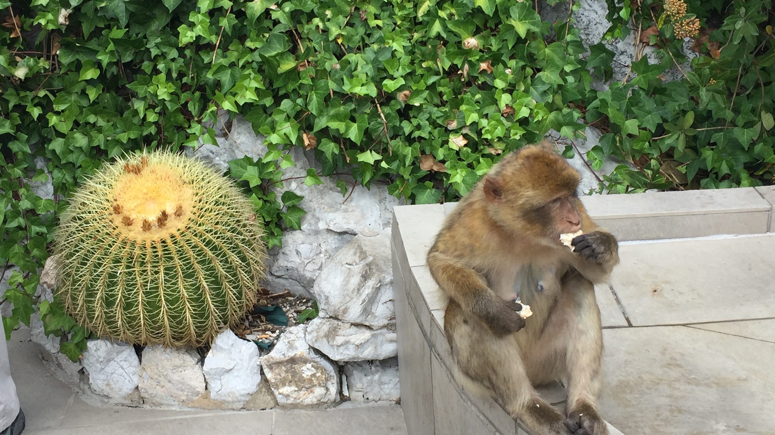 Monkey & Cactus
