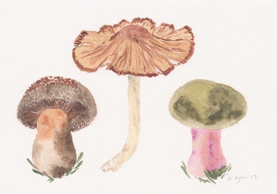 Mushrooms, Cortinarius_edited_edited