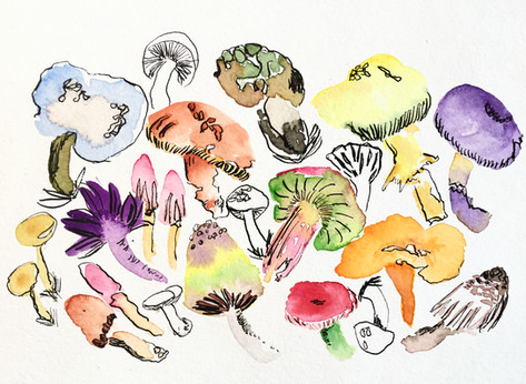 Mushrooms on Parade