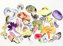 Mushrooms on Parade
