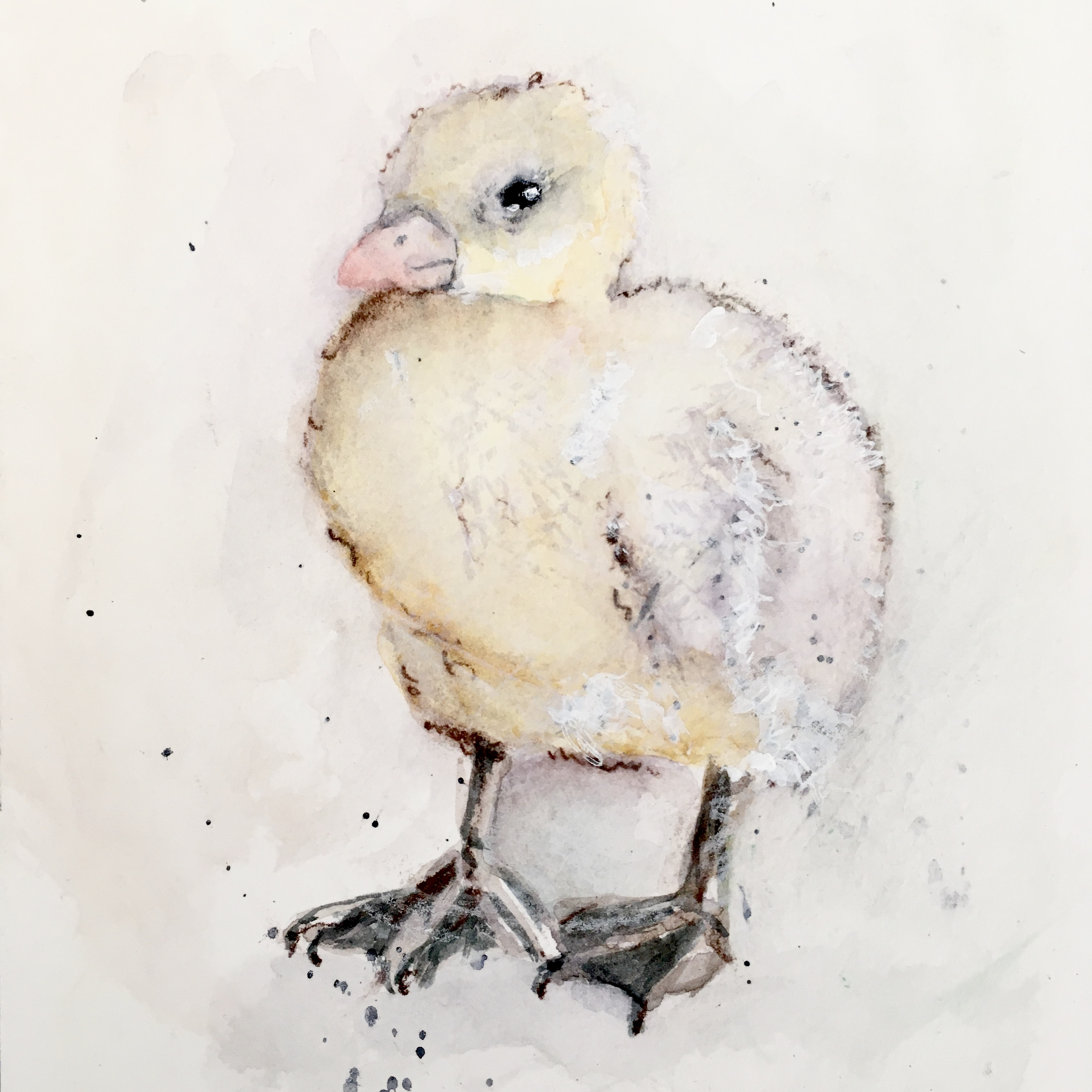 chick watercolor