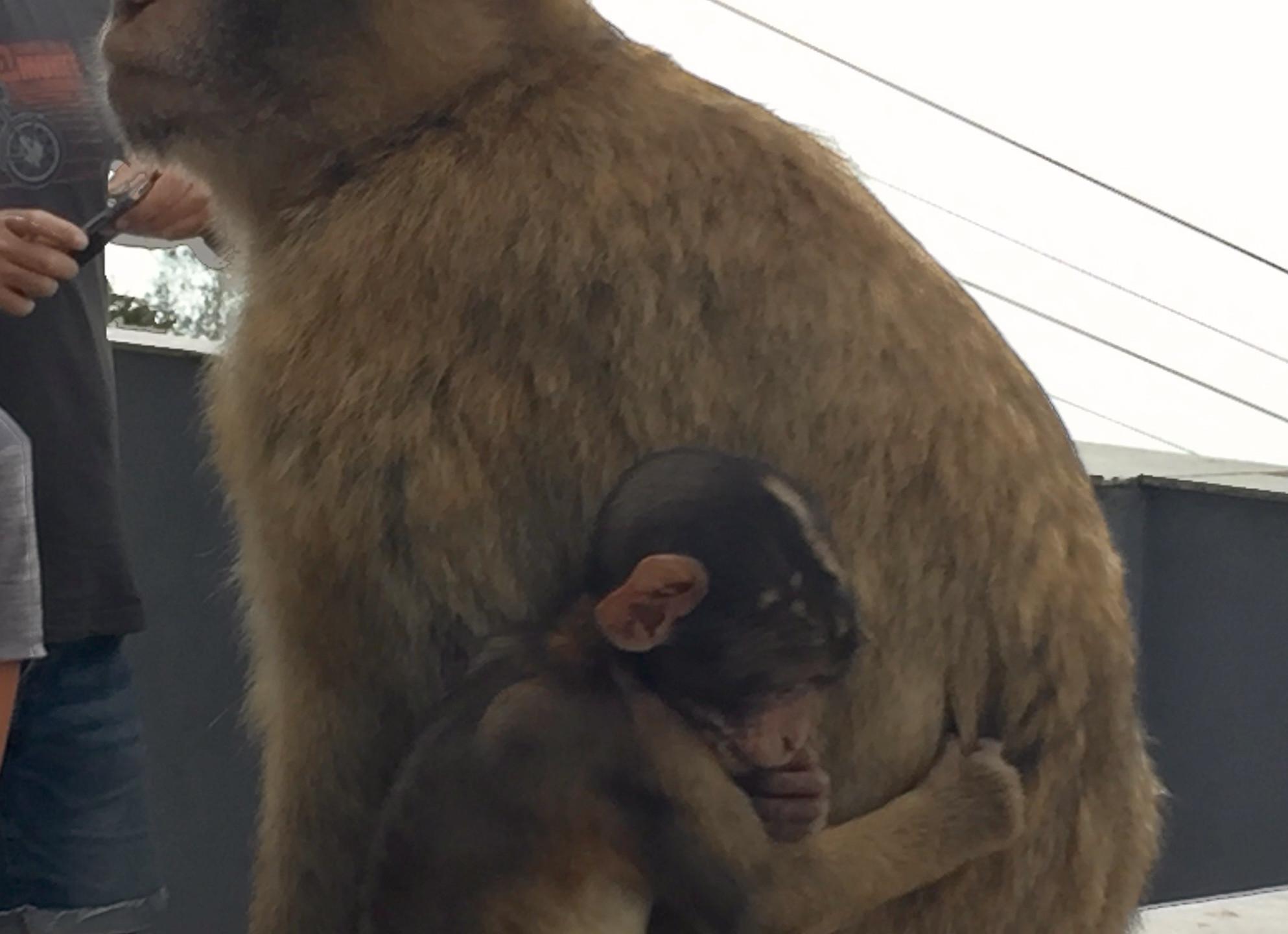 Mommy & Baby Monkeys