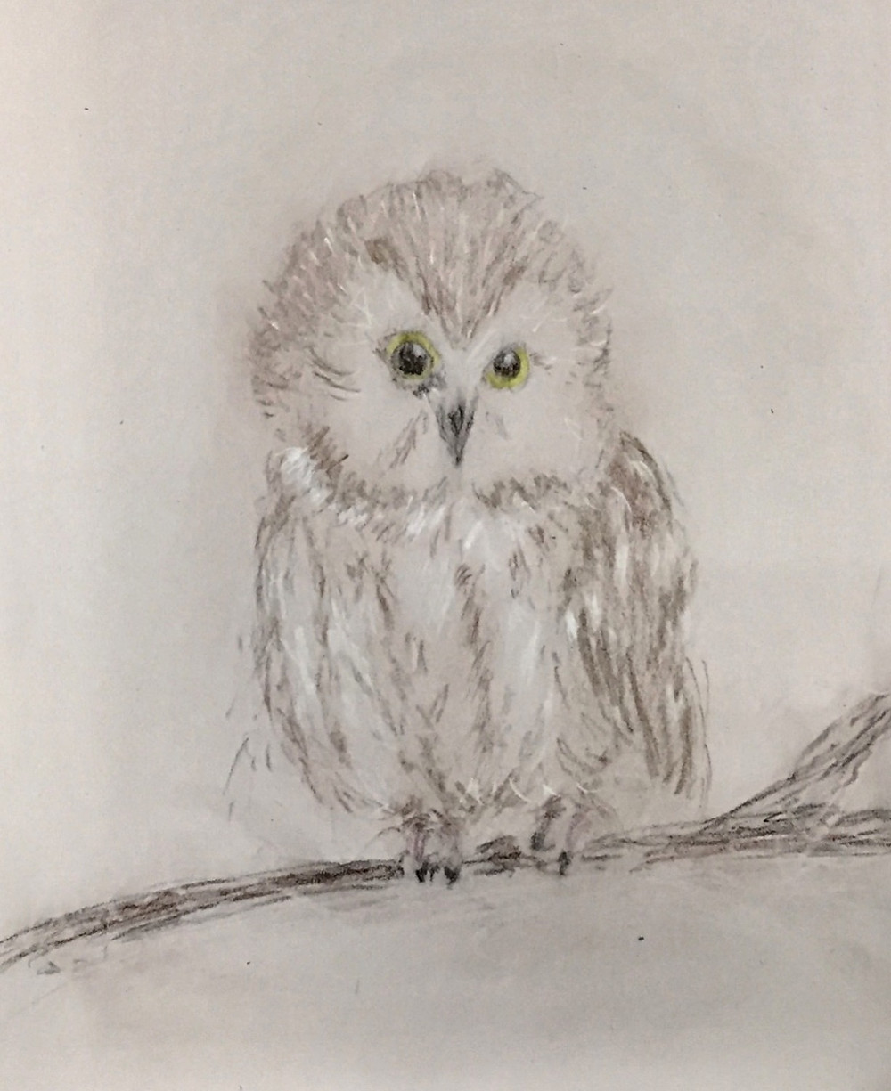 Saw Whet Owl_edited