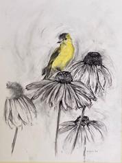 Goldfinch, 2020