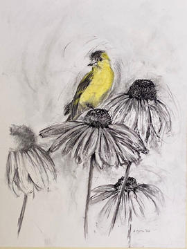 Goldfinch in charcoal