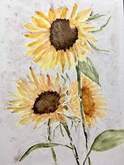 Sunflowers, 2020