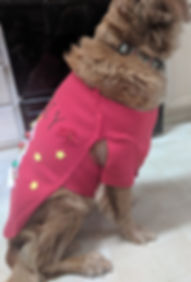 Golden Retriver side view with red Christmas sweater