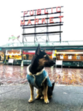 Small black dog in front of Pike's Place Market