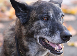 **SPOTLIGHT** The Dog Aging Project: Rockin' Awesome Research for Rover