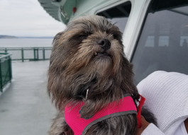 Ride Right with Rover! Seattle Pup Transit Guide