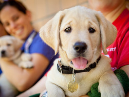 Guide Dogs for the Blind @Microsoft