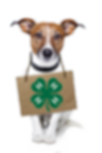 2018-Aug-09_1548_35-dogwith.png
