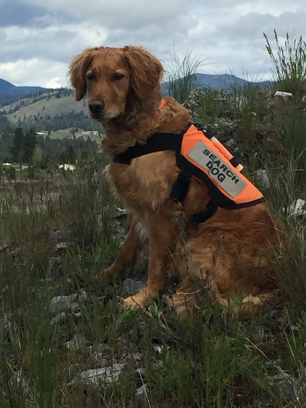 Search & Rescue K9 Ruger on mountain