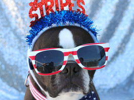 Forget the Fireworks: Do the Dog Jog Instead