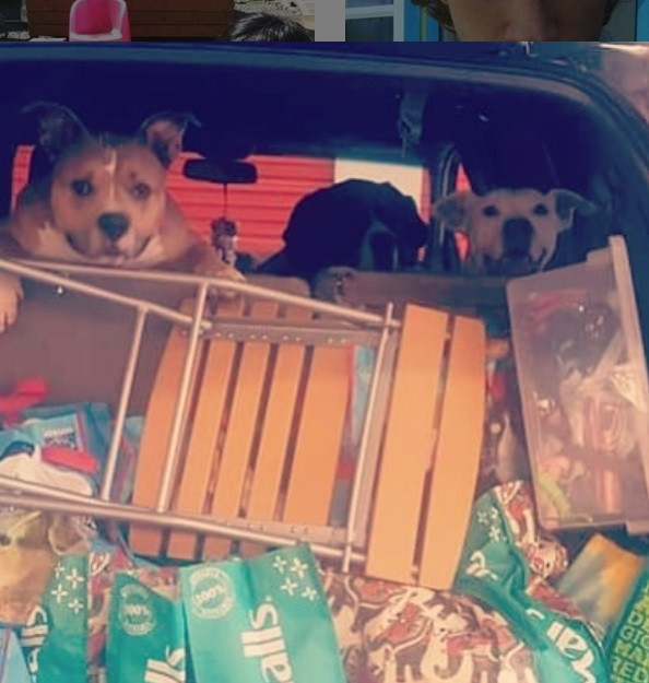 3 dogs and lots of doggie donations in the back of suv