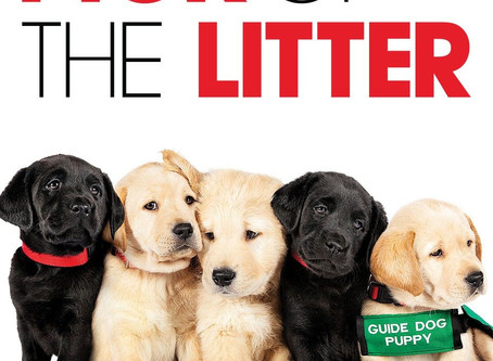 """Rain? That means it's MOVIE time! """"Pick of the Litter"""" Opens Tonight at Uptown!"""