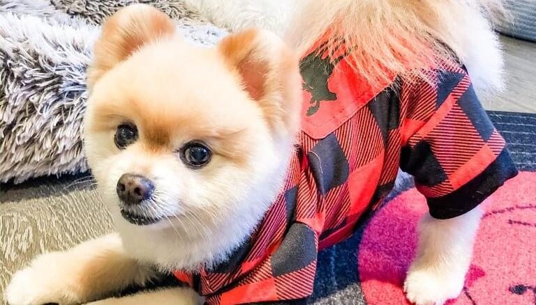 Seattle Pup SPOTlight: WOOF! Hello, Harley!