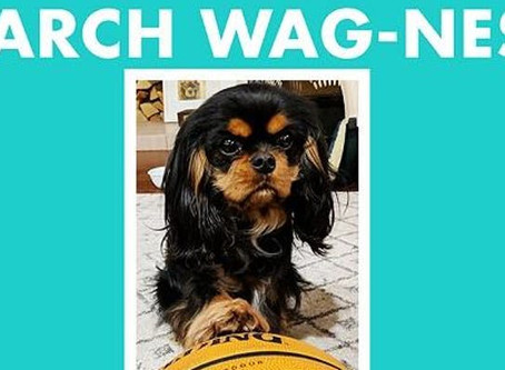 March Wag-ness! March 24 (Sunday)