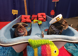 All Paws on Deck! Seattle Pup Meets the Seattle Boat Show