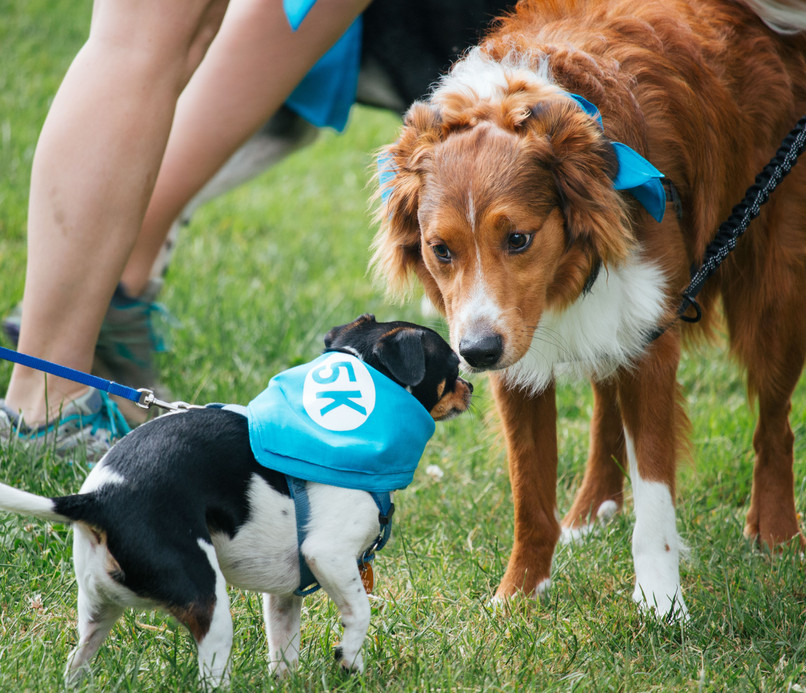 Lace Up Your Sneakers & Get Ready to Help Seattle's Animals